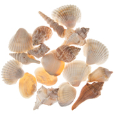 India Mix Shells