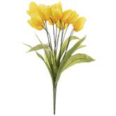 Yellow Tulip Bush