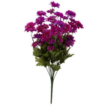 Purple Cosmo Bush