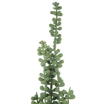 Hanging Bean Leaf Pick