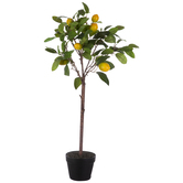 Lemon Tree In Black Pot
