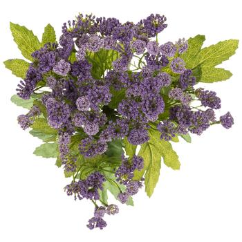 Purple Queen Anne's Lace Bush