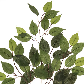 Fat Ficus Branch