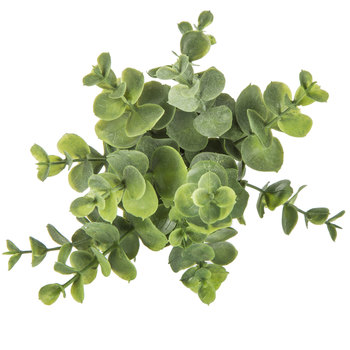Eucalyptus Pick