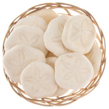 Sand Dollar Basket
