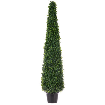 Boxwood Cone Topiary