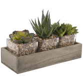 Succulent Trio In Wood Box