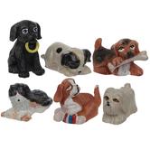 Miniature Puppies