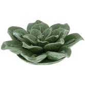 Green Crackled Succulent Flower