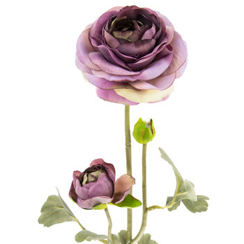 Purple Ranunculus Stem