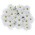 White Daisy Bush