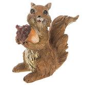 Squirrel Holding Acorn