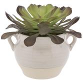 Succulent In Cream Pot