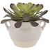 Succulent In Cream Pot