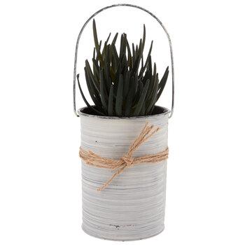 Succulent In Metal Pot
