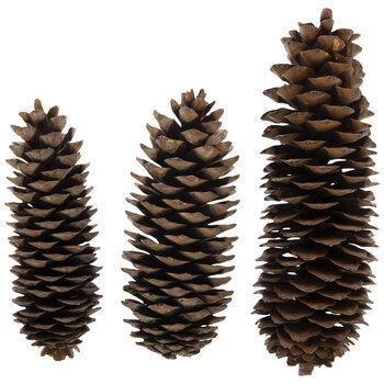 Brown Sugar Pinecones