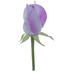 Lavender Rose Pick