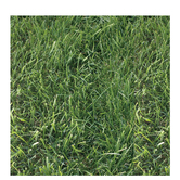 """Grass Scrapbook Paper - 12"""" x 12"""""""