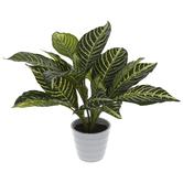 Green Zebra Plant In Pot