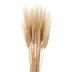 Golden Wheat Bundle
