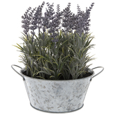 Lavender In Galvanized Metal Container