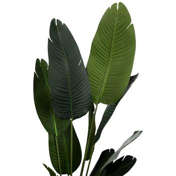 Traveler Banana Leaf In Black Pot