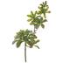 Trailing Echeveria Succulent Pick