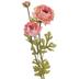 Rose Ranunculus Stem