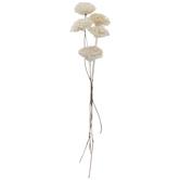White Sola Rose Bundle