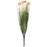 Orange Grass Bush With Blooms