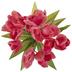 Pink Tulip Bush