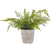 Fern In Honeycomb Pot