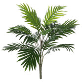 Areca Palm Bush
