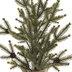 Pinecone Spruce Tree - 18