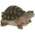 Turtle Staring Straight