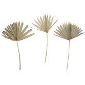 Dried Palm Fan Bundle