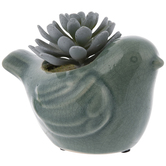 Teal Succulent In Bird Pot
