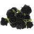Black Rose Bush