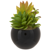 Succulents In Black Pot