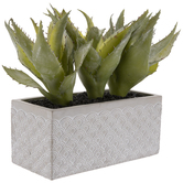 Spiky Aloe In Cement Planter