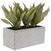 Spiky Aloe In Cement Planter