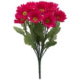 Hot Pink Gerbera Daisy Bush