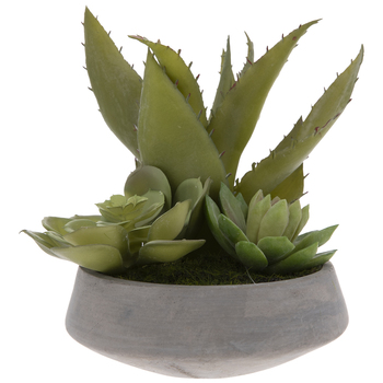 Succulents & Aloe In Uneven Pot