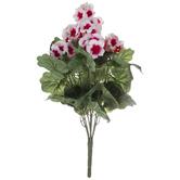 White & Pink Geranium Bush
