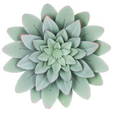 Green Succulent Metal Wall Decor