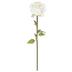 Cream Extra Large Rose Stem
