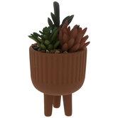 Succulents In Terra Cotta Pot
