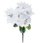 White Frosted Poinsettia Bush
