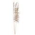 Uva Grass Bundle