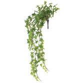 Green Star Ivy Bush